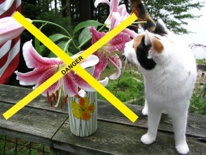 Easter Lily are Poisonous for Cats