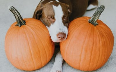 Can Dogs & Cats Eat Pumpkin? Is It Safe?