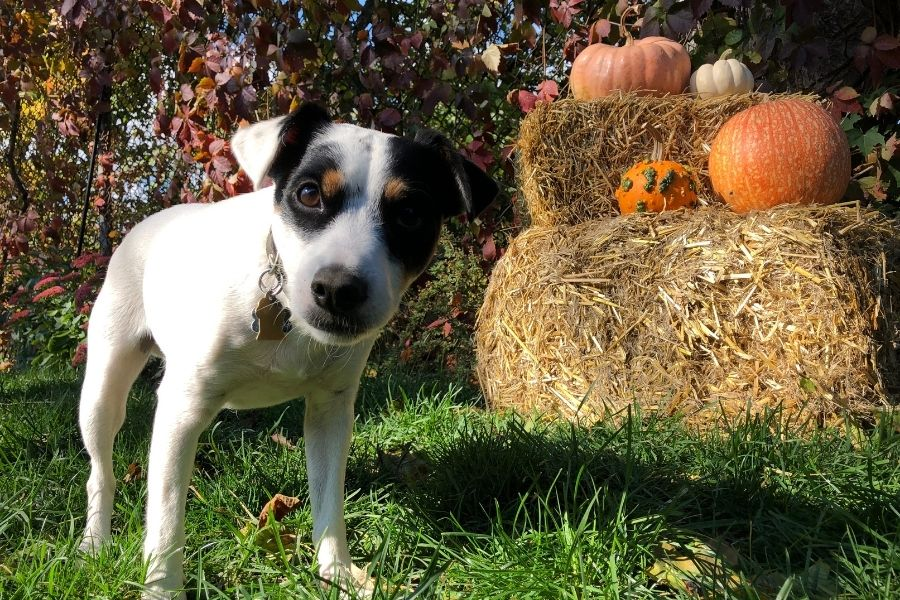 FALL for These Paw-some Pumpkin Patches in Vacaville