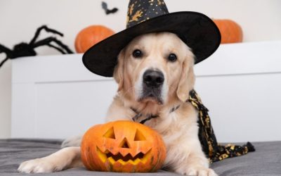 4 STEPS to Get Your Pet Comfortable in Their Halloween Costume